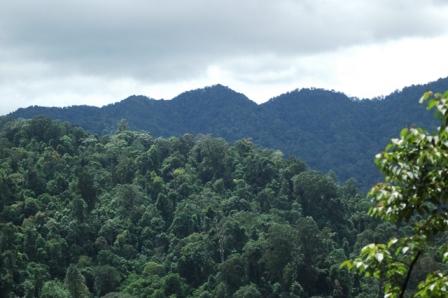 Monitoring Pasca Release Joni si Elang Jawa (Spizaetus bartelsi) di  PT. ANTAM UBPE Pongkor, Bogor