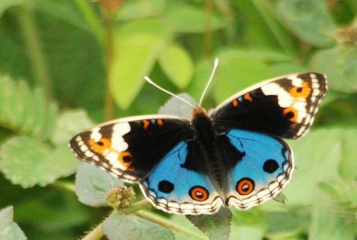 Makhluk Cantik Penghuni Kampus