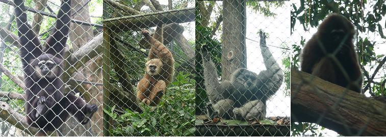 Mencari Kunci Identifikasi Primata di Schmutzer